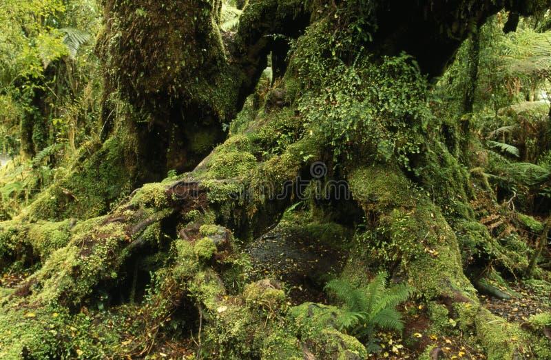 stary leśny wzrostu obraz stock
