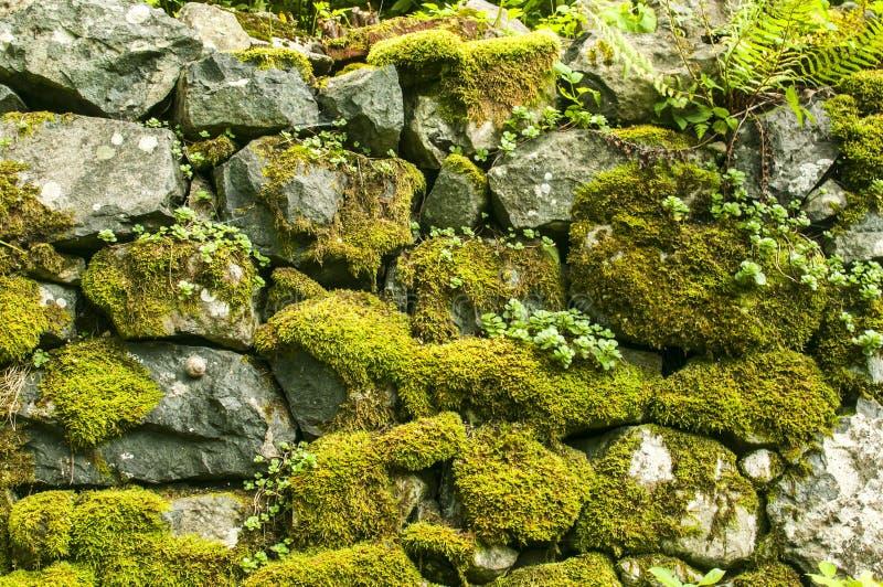 Stary mechaty kamiennej ściany zbliżenie obrazy royalty free