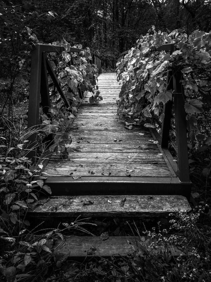 Stary most zakrywający w ulistnieniu zdjęcia stock