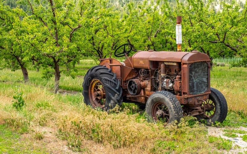 Stary ośniedziały ciągnik w sadzie obrazy royalty free