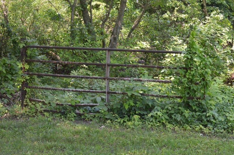 Stary Ośniedziały ogrodzenie w drewnach Wzdłuż zatoczki zdjęcia stock