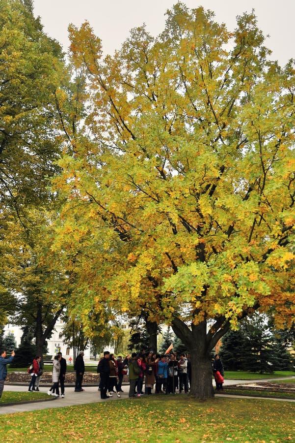 Stary ogród Moskwa Kremlin Zielona i żółta drzewo aleja obraz royalty free