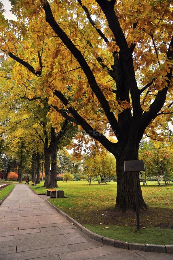 Stary ogród Moskwa Kremlin Zielona i żółta drzewo aleja fotografia stock
