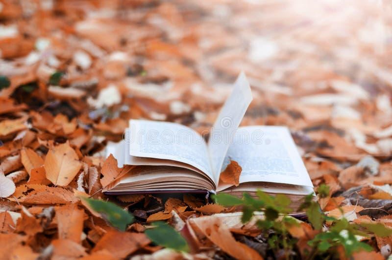 Stary otwiera książkę w parku w jesień liściach obrazy stock