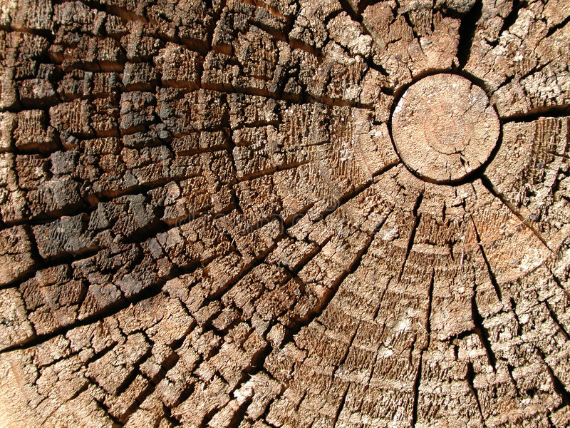 stary pierścień tekstury drewno drzew obrazy royalty free