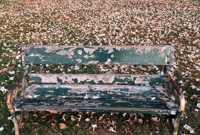 Stary Pojedynczy Długi krzesło z Różową kwiat kroplą Zakrywał ziemię zdjęcia royalty free