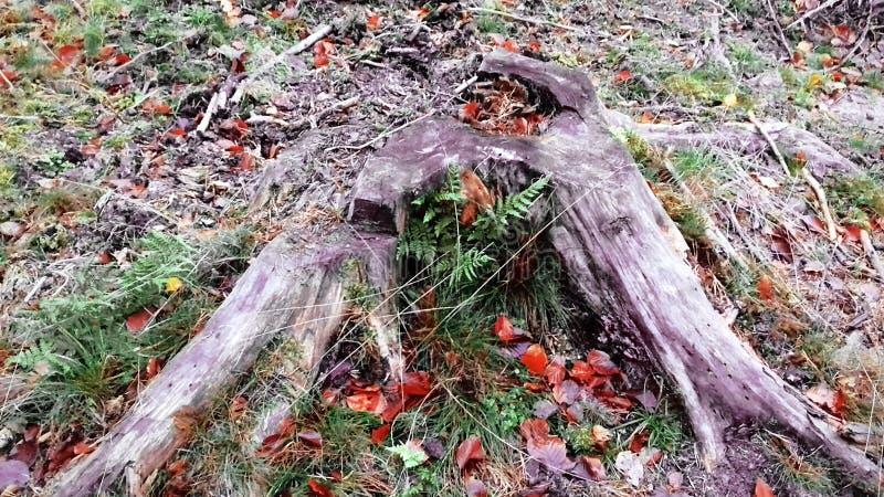 stary przegniły fiszorek piękna natury Zielona trawa autumn wcześniej obraz royalty free
