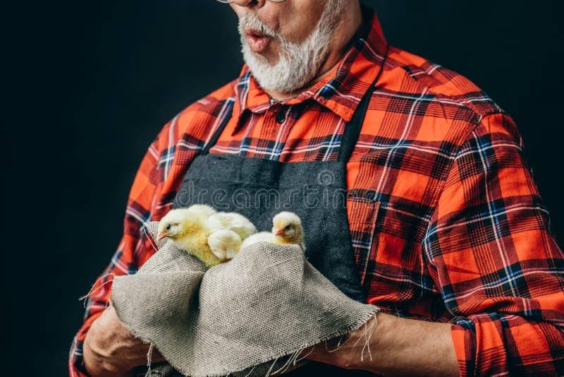 Stary rolnik śpiewa piosenki mali kurczaki obrazy royalty free