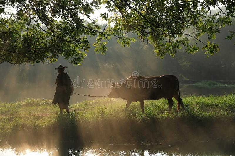 Stary rolnik pod antycznym banyan drzewem obrazy royalty free