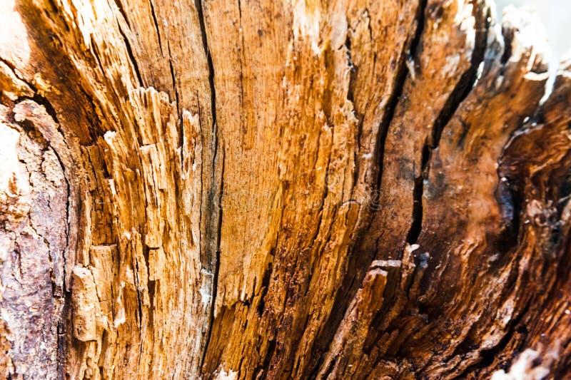 Stary rozłam z ax drzewem z nieregularną strukturą Łupka, fotografujący zakończenie Mała głębia pole Na drewnie zdjęcia royalty free