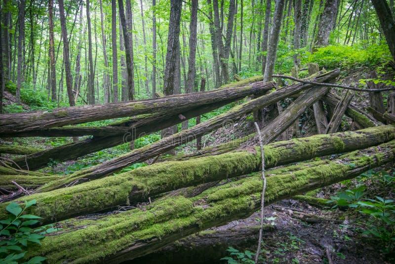 Stary rujnujący most butwienie notuje dalej las obrazy royalty free