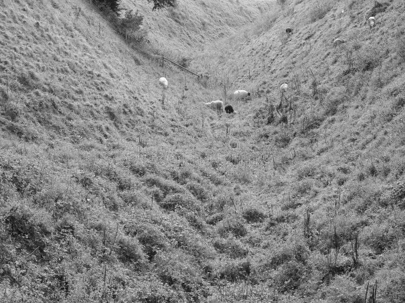 Stary Sarum kasztelu przykop w Salisbury w czarny i biały fotografia stock