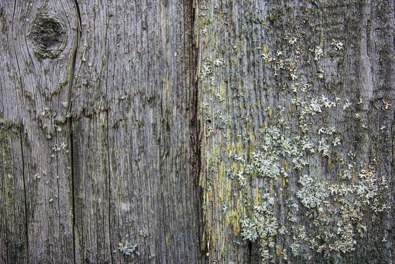 Stary siwieje deski z zielonym mech i liszajem zdjęcie stock
