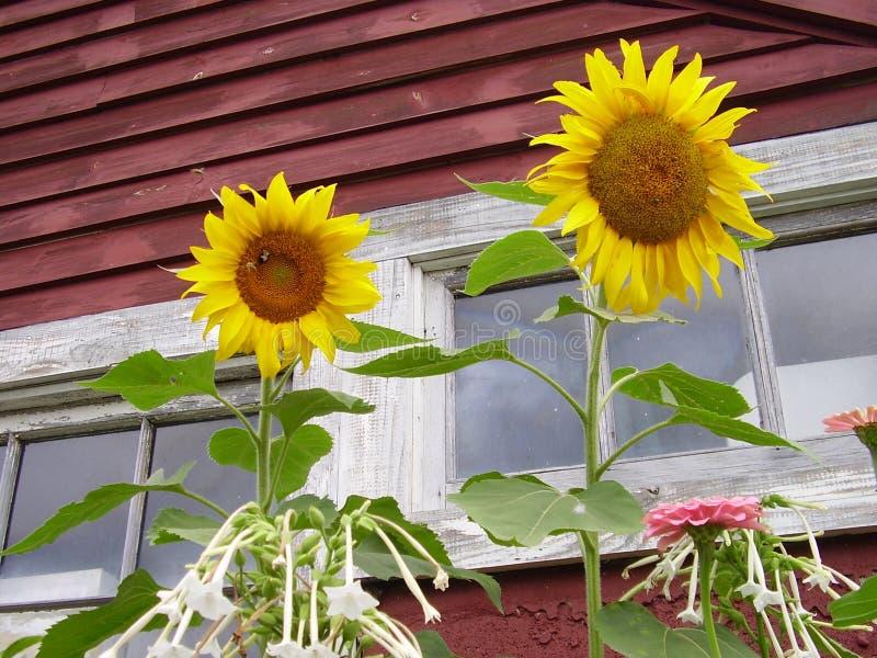 stary stodoły okno zdjęcia stock