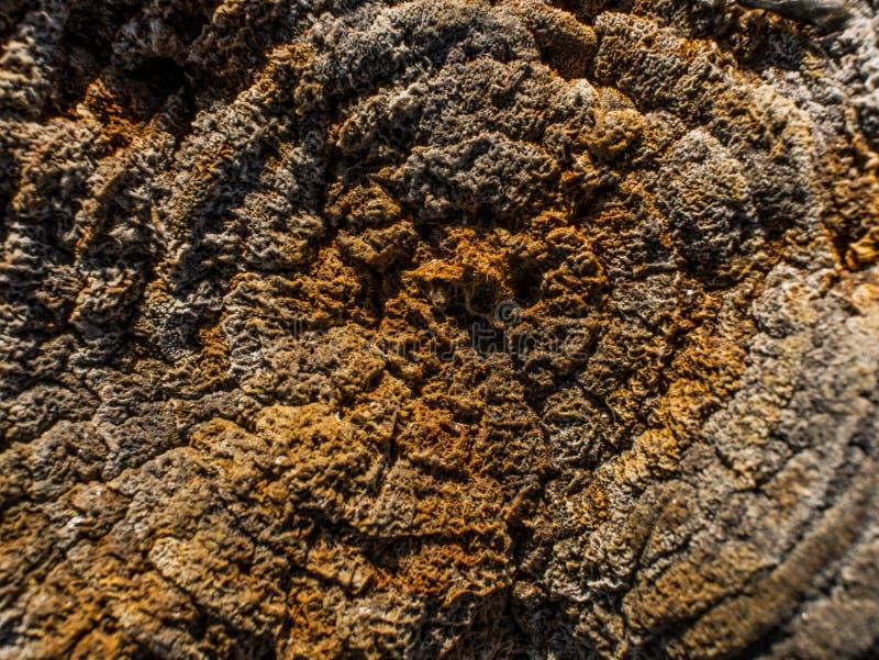 Stary suchy fiszorek z mech Drewniany tekstury t?o blisko brown konsystencja do lasu Pi?kny naturalny drewniany t?o obraz royalty free