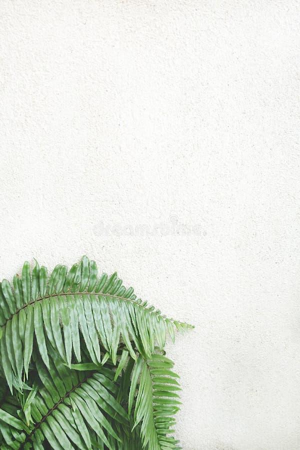 Stary tekstury ściana z cegieł, tło fotografia royalty free