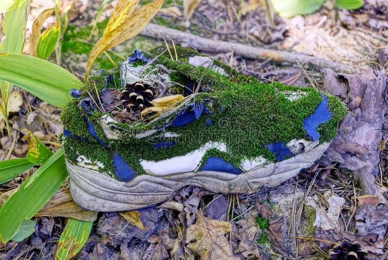Stary tenisówka przerastający z zielonym mech jest na trawie i suszy liście obraz royalty free