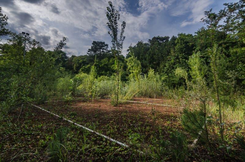 stary tenisowy s?d w lesie zdjęcie stock