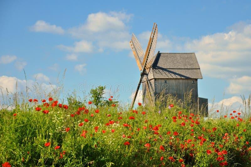 Stary wiatraczek i kwiaty obraz royalty free
