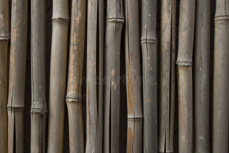 Stary Wietrzejący bambus zdjęcia royalty free