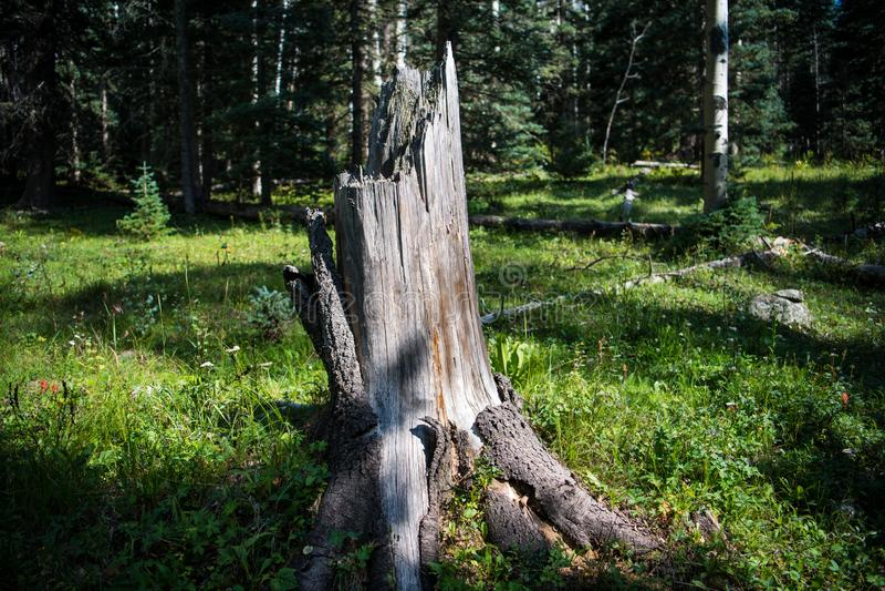 Stary, wietrzejący drzewny fiszorek w, trawiastej, jarzębatej łące z rozrzuconymi wildflowers, zdjęcia stock