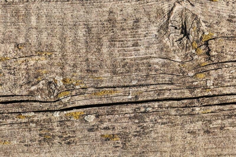 Stary Wietrzejący Krakingowy Supłający Sosnowego drewna Floorboard Grunge tekstury szczegół obraz stock