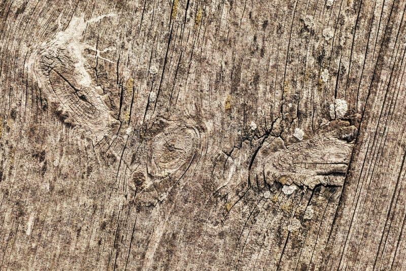 Stary Wietrzejący Krakingowy Supłający Sosnowego drewna Floorboard Grunge tekstury szczegół obrazy royalty free