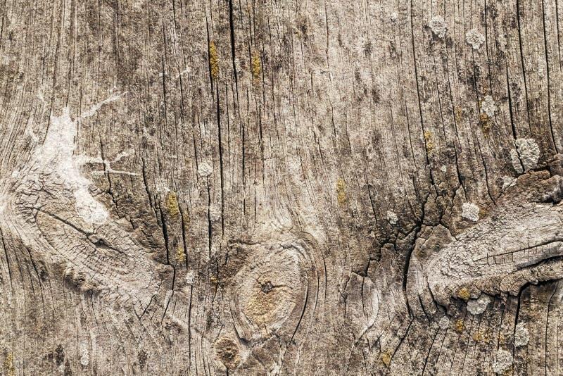 Stary Wietrzejący Krakingowy Supłający Sosnowego drewna Floorboard Grunge tekstury szczegół zdjęcie royalty free