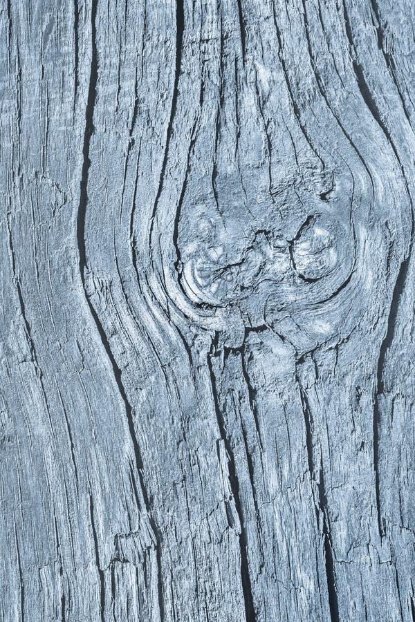 Stary Wietrzejący Powyginany Krakingowy Drewniany Szorstki Prochowego błękita Grunge tekstury szczegół fotografia royalty free