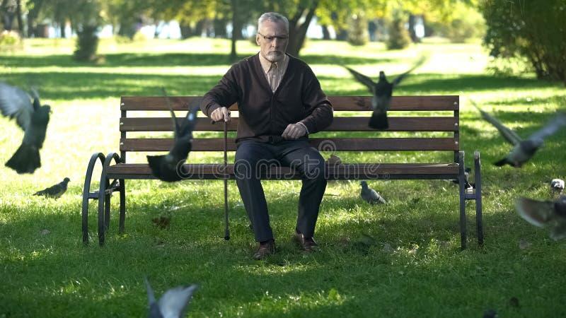 Stary wzburzony męski wygania kierdel gołębie w parku, samotności i emeryturą, zdjęcie stock
