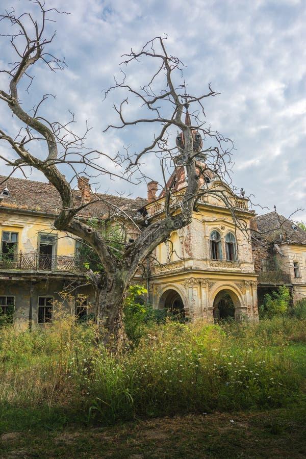 Stary zaniechany średniowieczny kasztel z strasznym drzewem w przodzie fotografia stock