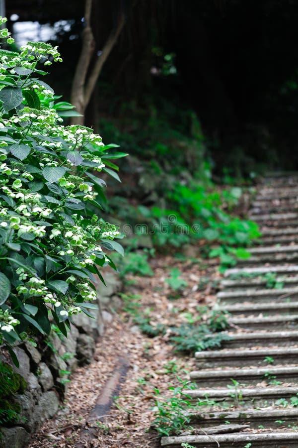 Stary zaniechany schody w parku będzie iść zielony żywy, Wysoce wilgotny w tropikalnym klimacie zdjęcie royalty free