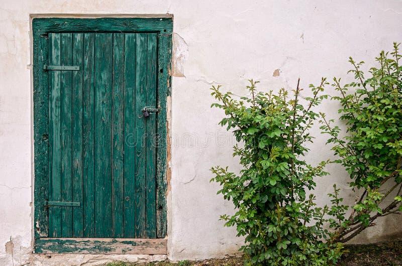 Stary zielony drzwi z psem różanym i whitte ścianą obraz stock