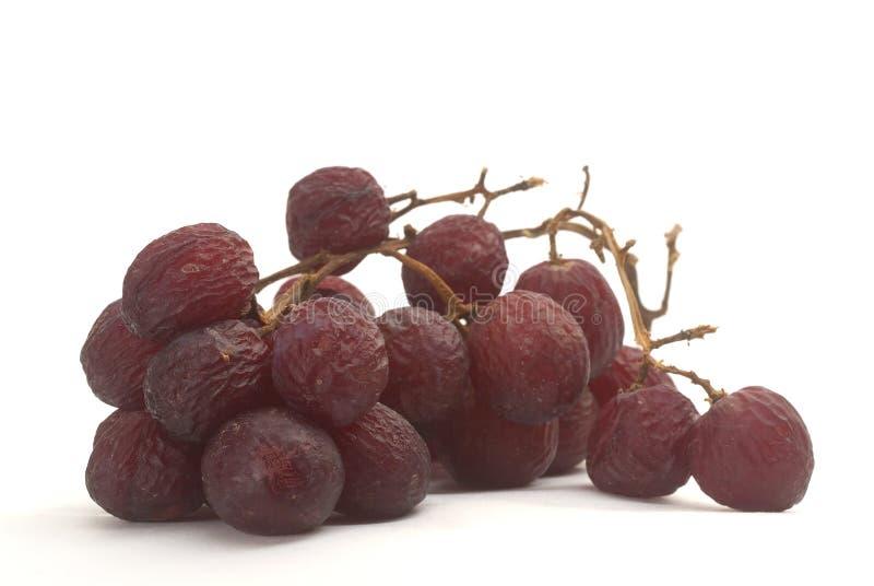 starzeń winogron, fotografia royalty free