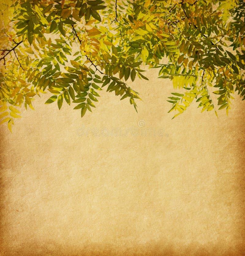 Starzejąca się papierowa tekstura z gałąź jesień liście zdjęcie royalty free