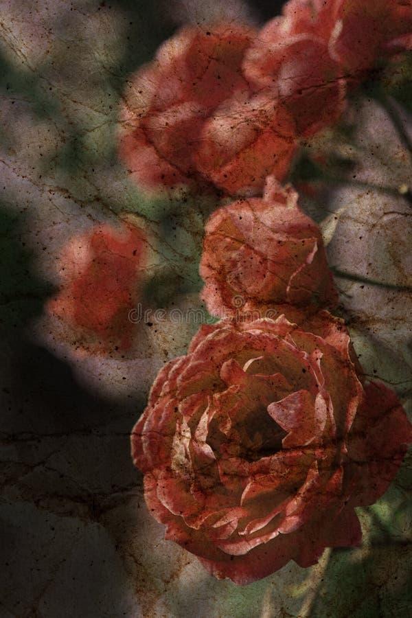 Starzejący się grunge textured kwiecisty tło ilustracja wektor