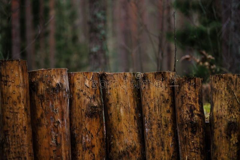 starzy drewniani trenshes w Latvia odbudowa pierwszy wojna światowa obraz royalty free
