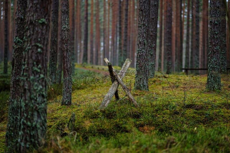 starzy drewniani trenshes w Latvia odbudowa pierwszy wojna światowa zdjęcia stock