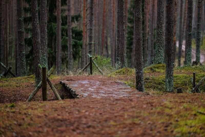 starzy drewniani trenshes w Latvia odbudowa pierwszy wojna światowa obrazy stock