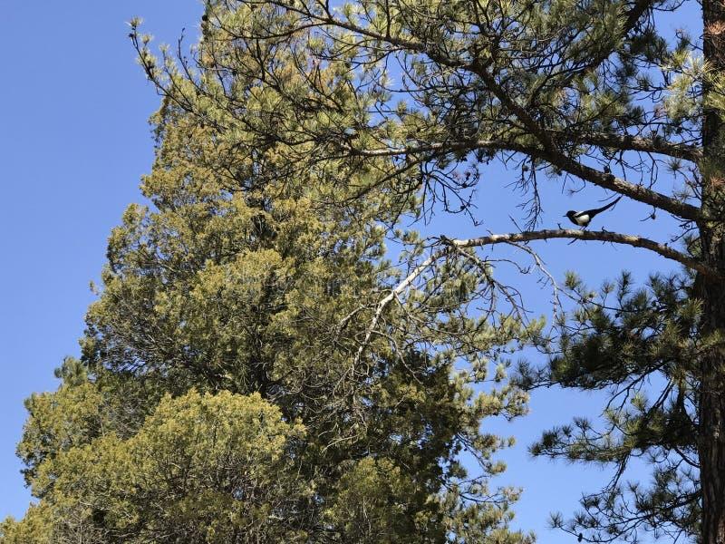 Starzy drzewa w wio?nie obraz stock