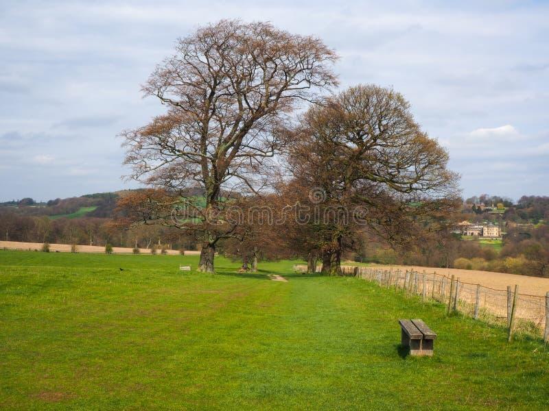 Starzy drzewa w zielenieją pole w parkland zdjęcie stock
