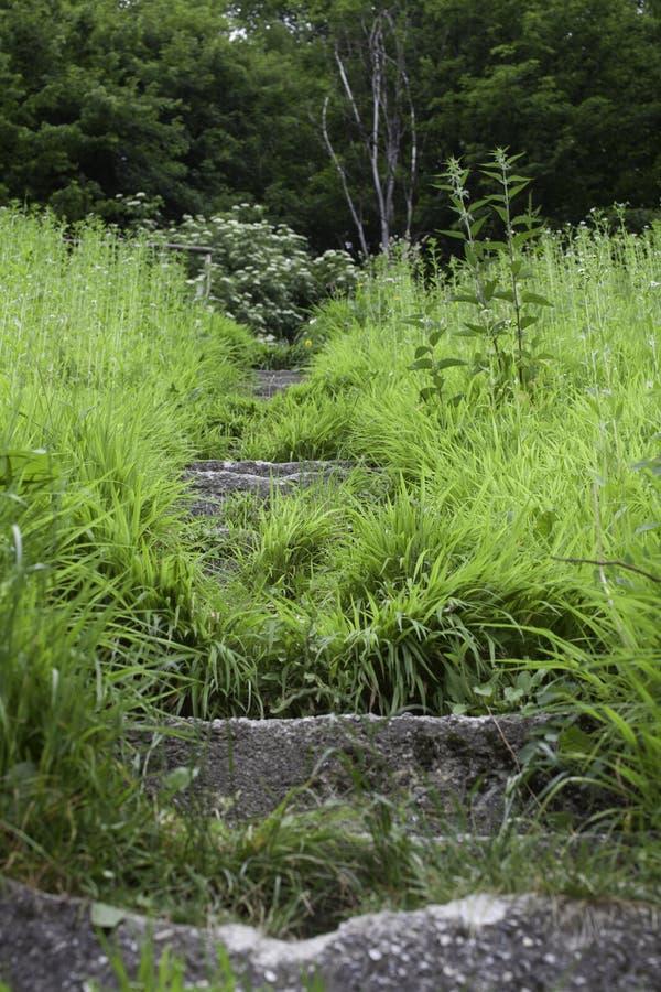 Starzy kamieni kroki przerastający z mech i zielonymi liśćmi Cornwall, Anglia,/ fotografia stock