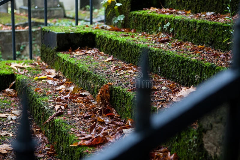 Starzy kamienni schodki zakrywający z mech obraz stock