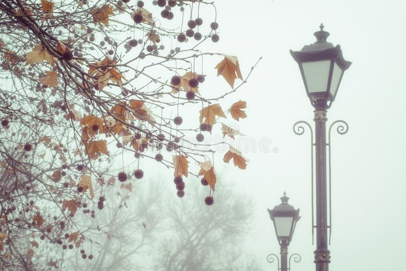 Starzy lampiony i klony w jesień parku zdjęcie stock