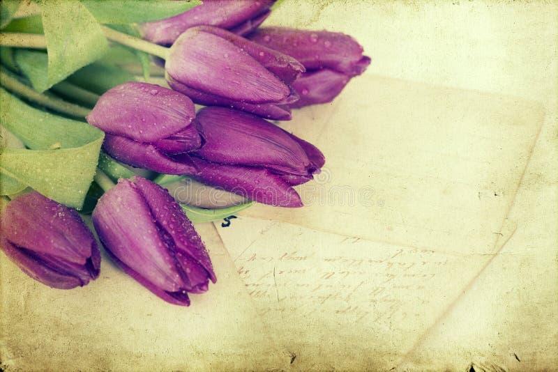 Starzy listy miłośni i purpurowi tulipany obrazy royalty free