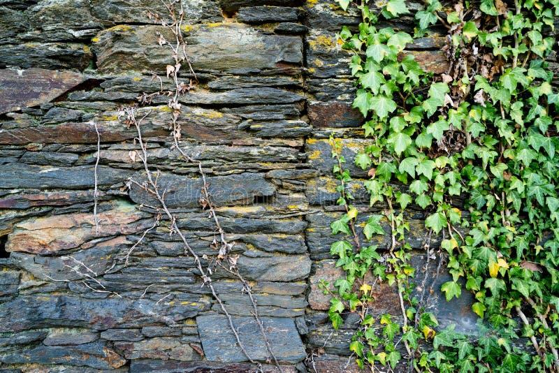 Starzy naturalni bloki textured grunge cegie? kamienny t?o z zielonej ro?liny doro?ni?ciem na nim eco poj?cia wizerunek fotografia royalty free