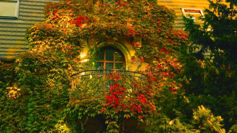 Starzy piękni tenement balkony zakrywają w czerwonych kwiatach - wizerunek fotografia stock