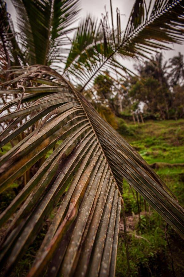 Starzy ryż pola w Bali zdjęcia royalty free