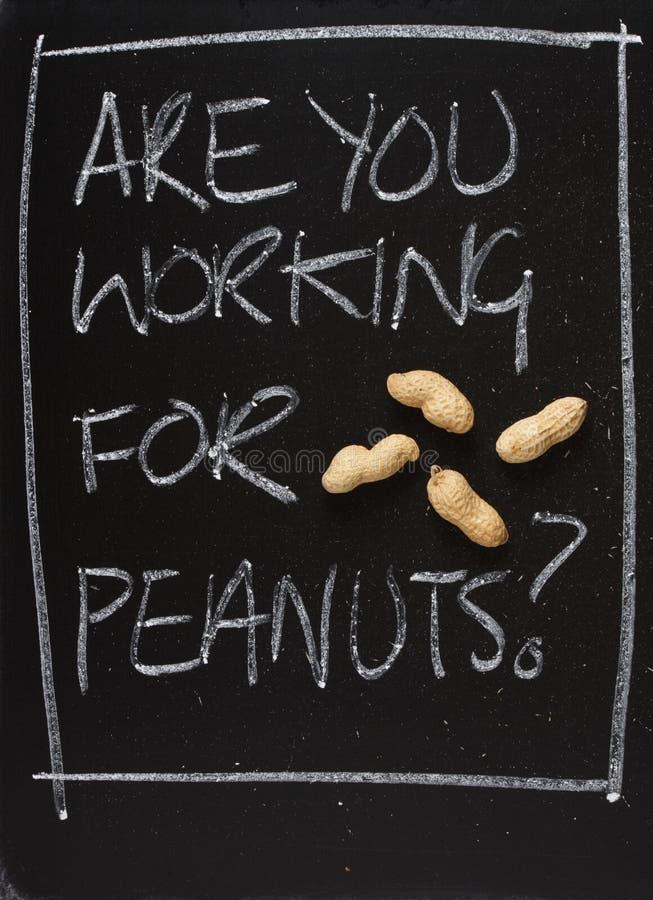 State lavorando per le arachidi? fotografie stock