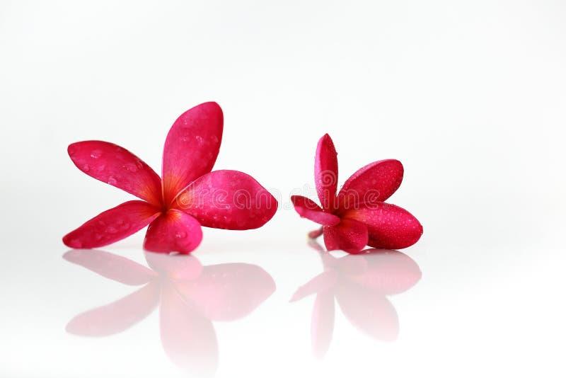 Station thermale rouge de fleur image stock